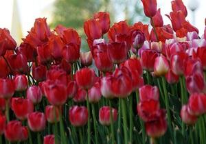 В Донецке сотрудники ГАИ поздравляли женщин-водителей тюльпанами
