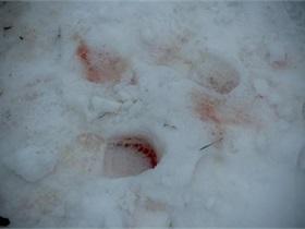 МВД вспомнило о преступлении пятилетней давности, расследуя громкое убийство в Киеве