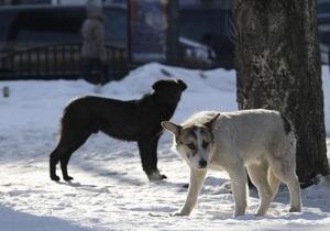 В Томске стая собак помешала самолету приземлиться с первого раза