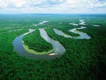 Бразилия остановит гибель лесов Амазонки