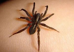 В США полиция задержала голого мужчину, который убегал от паука