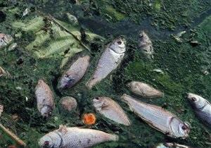 Киевводоканал опасается ухудшения качества питьевой воды из-за гибели рыбы в водоемах