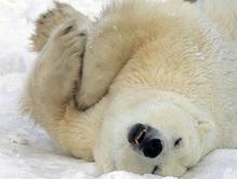 WWF: В России процветает браконьерство