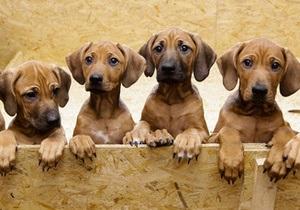 В Германии собака родила 17 щенков