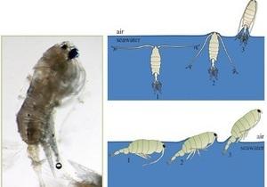 Ученые обнаружили у планктона способность к полету