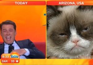 Сердитый котик дал эксклюзивное интервью телеканалу Австралии - грампи кэт - grumpy cat