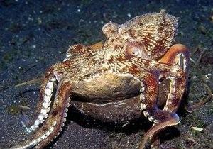 Тысячи мертвых осьминогов выбросило на португальское побережье