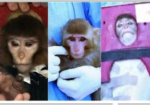 У вернувшейся с орбиты обезьяны исчезла родинка. Мировые СМИ подвергли сомнению запуск Ираном капсулы жизни