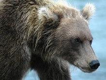Милиция расследует гибель человека в Николаевском зоопарке