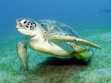 В Кении за черепахами установили наблюдение