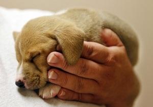 В Британии владельцев собак стало больше, чем владельцев кошек