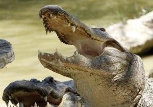 Жительница Бразилии обнаружила у себя дома полутораметрового аллигатора