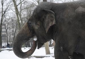 Комиссия ООН по преступности впервые обсудила охрану слонов и носорогов в Африке