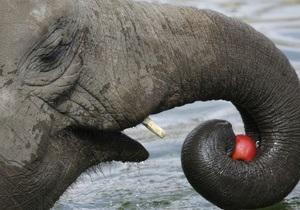 В мэрии заявили, что Киевский зоопарк не готов принять новых слонов
