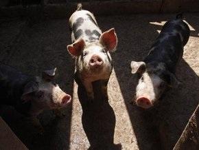 Фотогалерея: Свиной грипп атакует