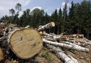 Прокуратура Киева организовала проверку информации о вырубке деревьев в Святошинском лесу