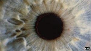 Ученые: имплантаты сетчатки из стволовых клеток - безопасны