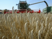 Казахи приостановили экспорт зерна