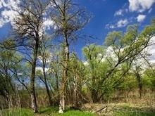 Прокуратура опротестовала выделение Киевсоветом земли на Жуковом острове