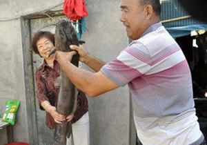 В Китае сом устроил погром в жилом доме