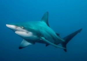 Турист оттащил акулу от австралийского пляжа - Австралия - акула - видео