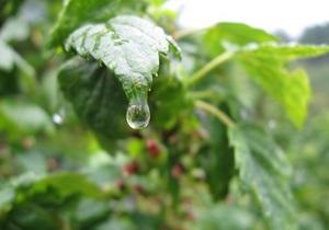 Жара в Украине идет на спад. Завтра местами дожди с грозами