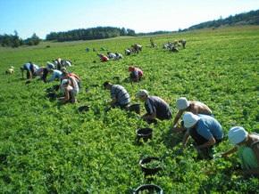 Поляки продолжают нанимать украинских рабочих