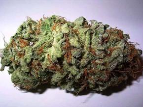 В США начал работу первый официальный поставщик марихуаны