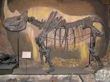 В краже редкого шерстистого носорога подозревают украинца