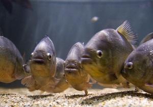 Общие предки животных и рыб общались жестами