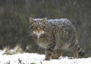 В Киевском зоопарке появился дикий лесной кот