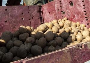 Британские ученые предлагают лечить язву желудка картофельным соком