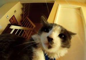 Представлен первый в мире фильм, снятый котами