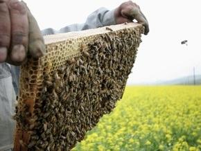 В Киеве пройдет международный форум пчеловодов
