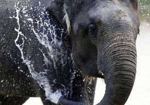 В Харьковском зоопарке состоится день слонов