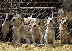 В США запрещают операции по лишению собак и кошек голоса