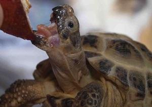 Украинец пытался нелегально ввезти 200 черепах в Польшу