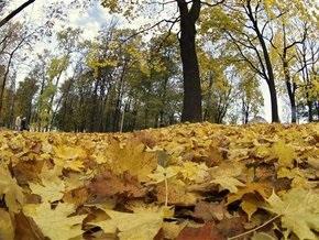 Киевских коммунальщиков привлекли к ответственности за сжигание листьев