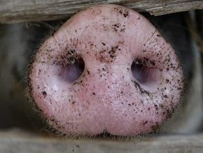 В Японии появился компьютерный вирус,  информирующий  о свином гриппе