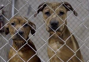 В Киеве могут закрыть приют для животных. 100 собакам и кошкам ищут новое жилье
