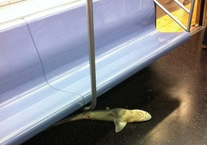 В метро Нью-Йорка нашли труп акулы