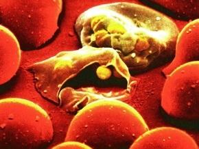 Киевская санэпидемстанция проверит турагентства на соблюдение профилактики малярии