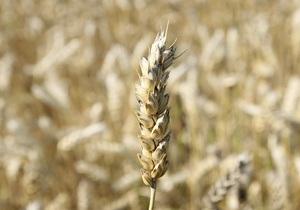 Украина может экспортировать до 20 млн тонн зерна - Кабмин