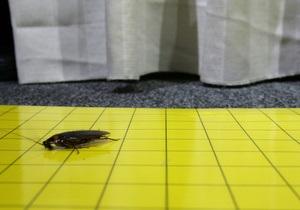 Ученые установили, как тараканы делают сальто при прыжке с ветки дерева