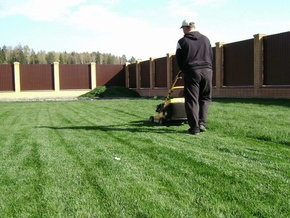 Ученые: Запах свежескошенной газонной травы снимает стресс