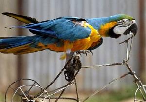 В киевском зоопарке устроят игры для попугаев