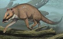 Ученые определили предка морских млекопитающих