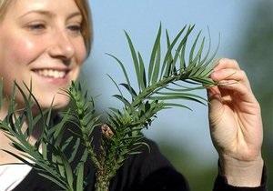 В США создали генетически модифицированные растения, способные искать взрывчатые вещества