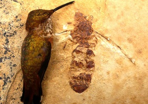 В США обнаружили останки гигантского муравья