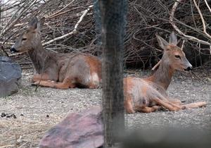 Киевский зоопарк рассматривает возможность открытия филиала на ВДНХ